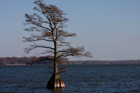 Reelfoot Lake Tenn.
